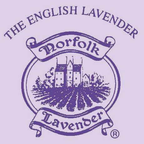 norfolk lavendar